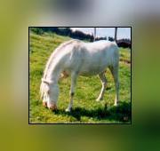 Logo représentant Centre equestre de la neuville