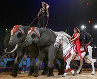 Logo représentant Fête lilloise du cirque