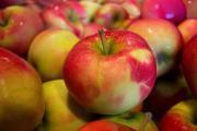Image illustrant Fête de la Pomme