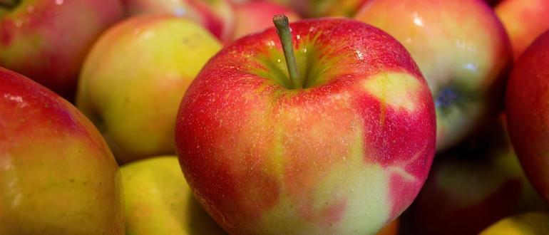 Visuel pour fête de la pomme