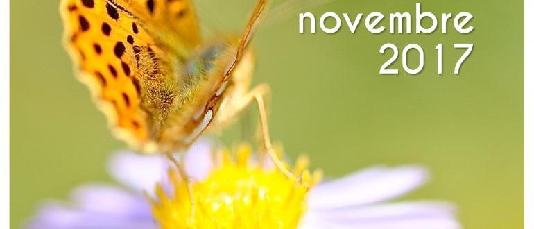 Visuel pour insectopia - fête de l'abeille et des insectes